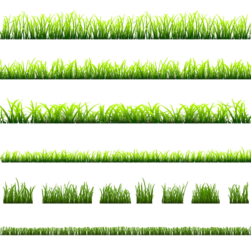 Collection Of Different Types Of Green Grass