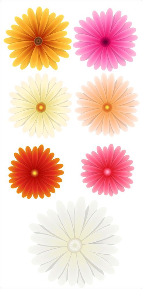 Colored Flowers Vectors
