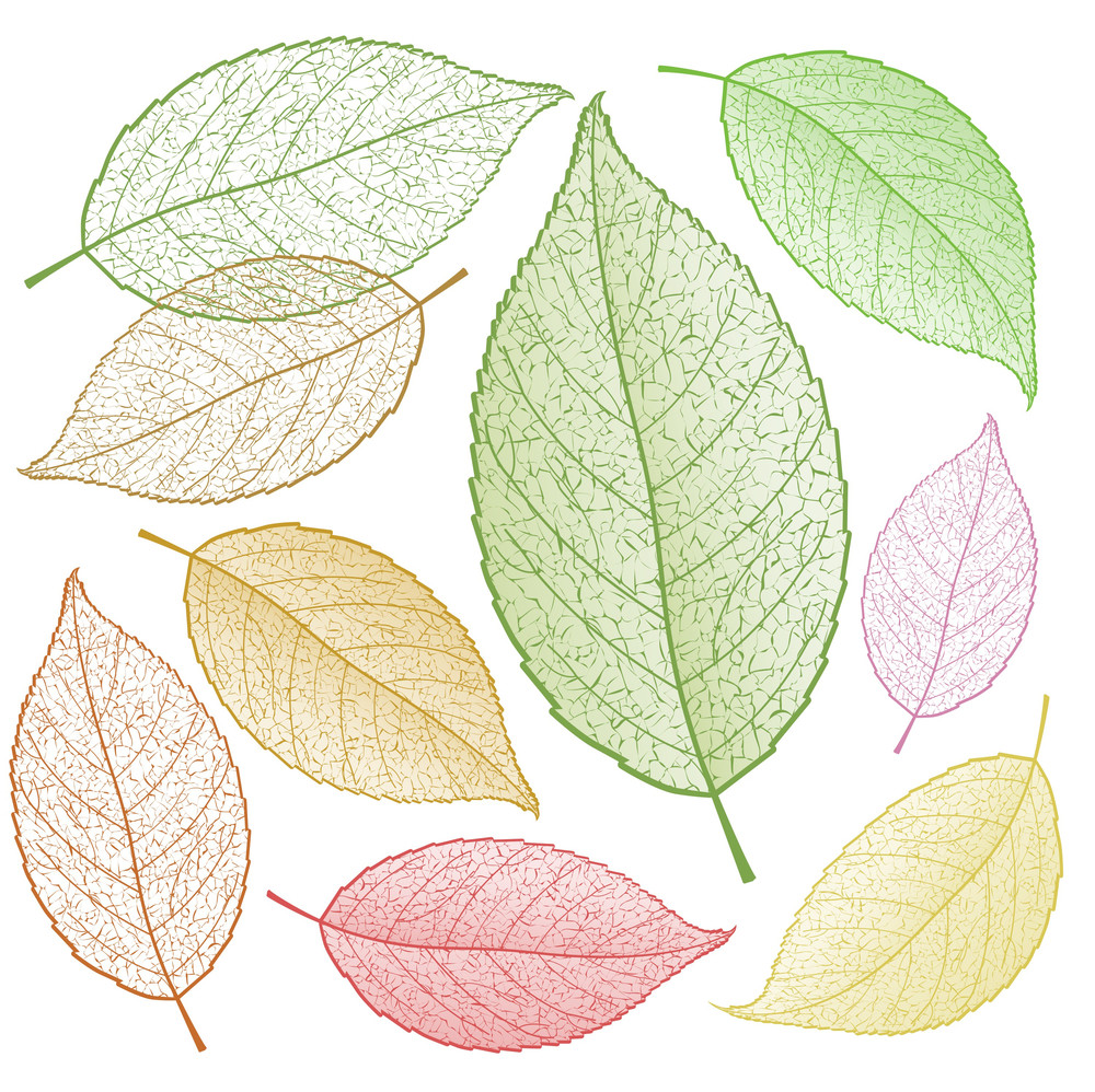 Colored Vector Leaf Skeletons.