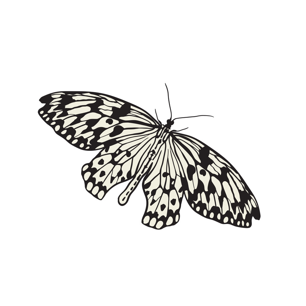 Colorful Abstract Illustration Of Butterfly