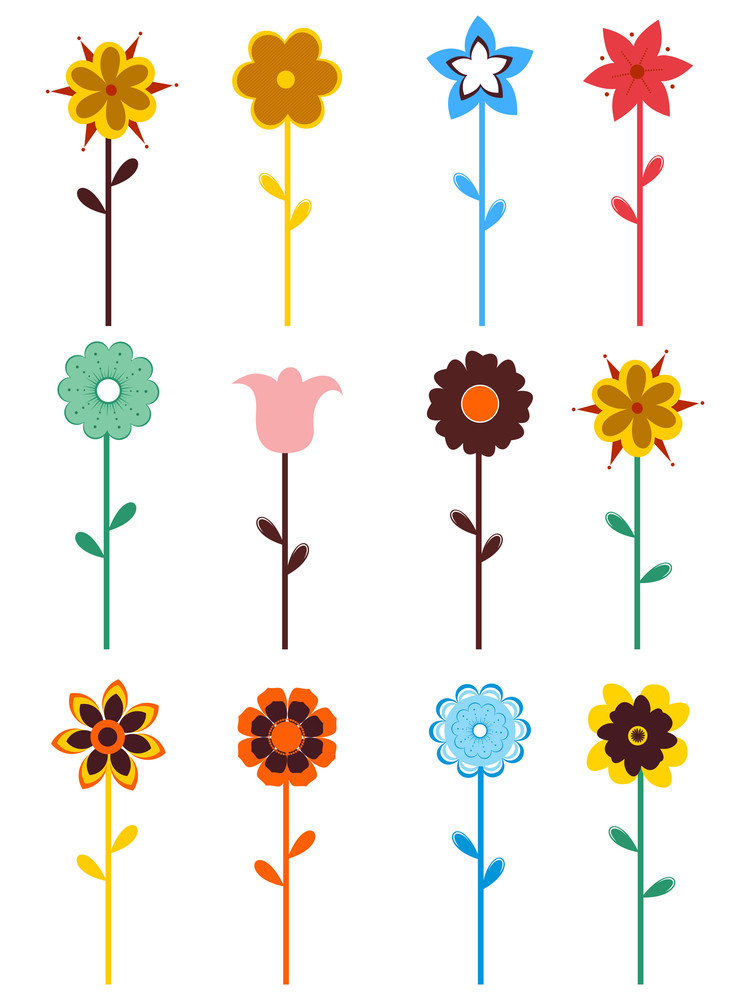 Colorful Bloom On White Background