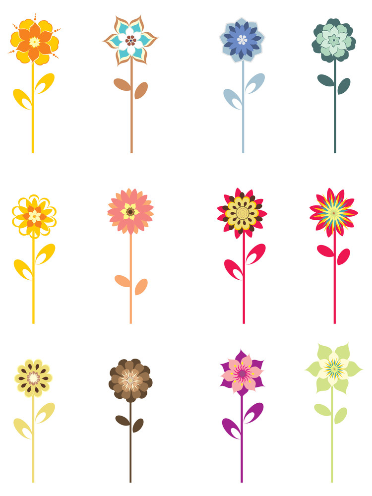 Colorful Blossoms On White Background