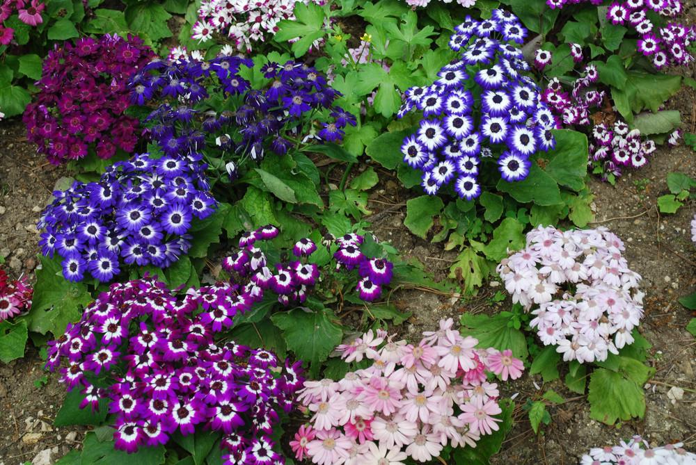 Colorful Daisys On A Park