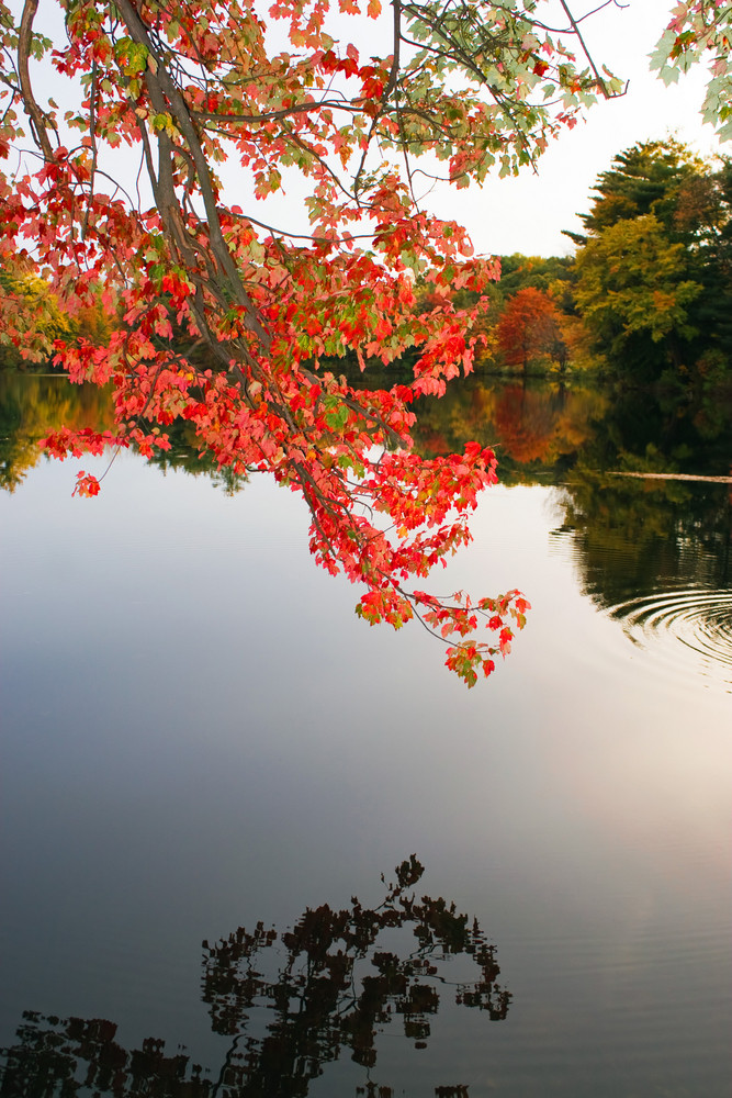 Colorful Fall Foliage Over the Water
