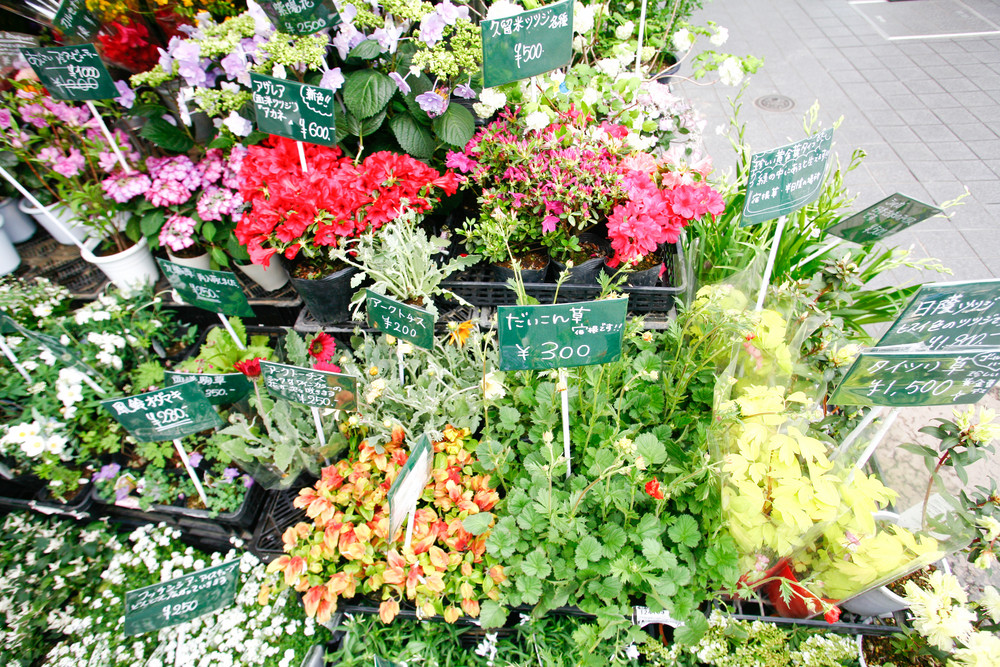 Colorful flowers in a flower shop on a market