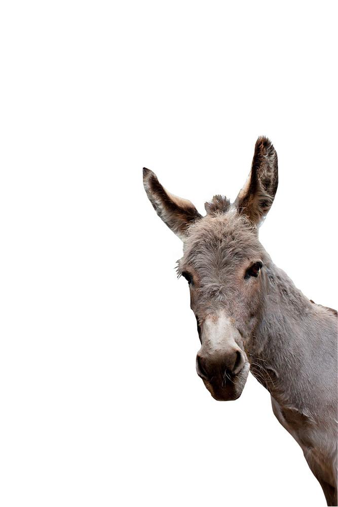 Corner Donkey Iso