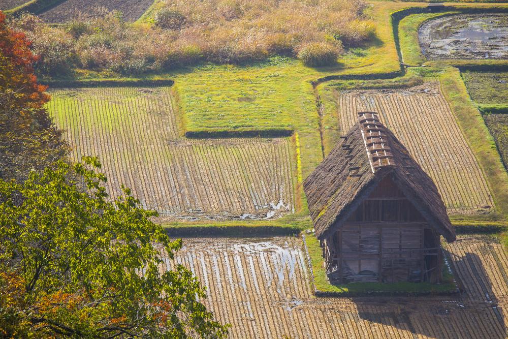 Cottage and rice field in small village shirakawa-go japan. autumn season