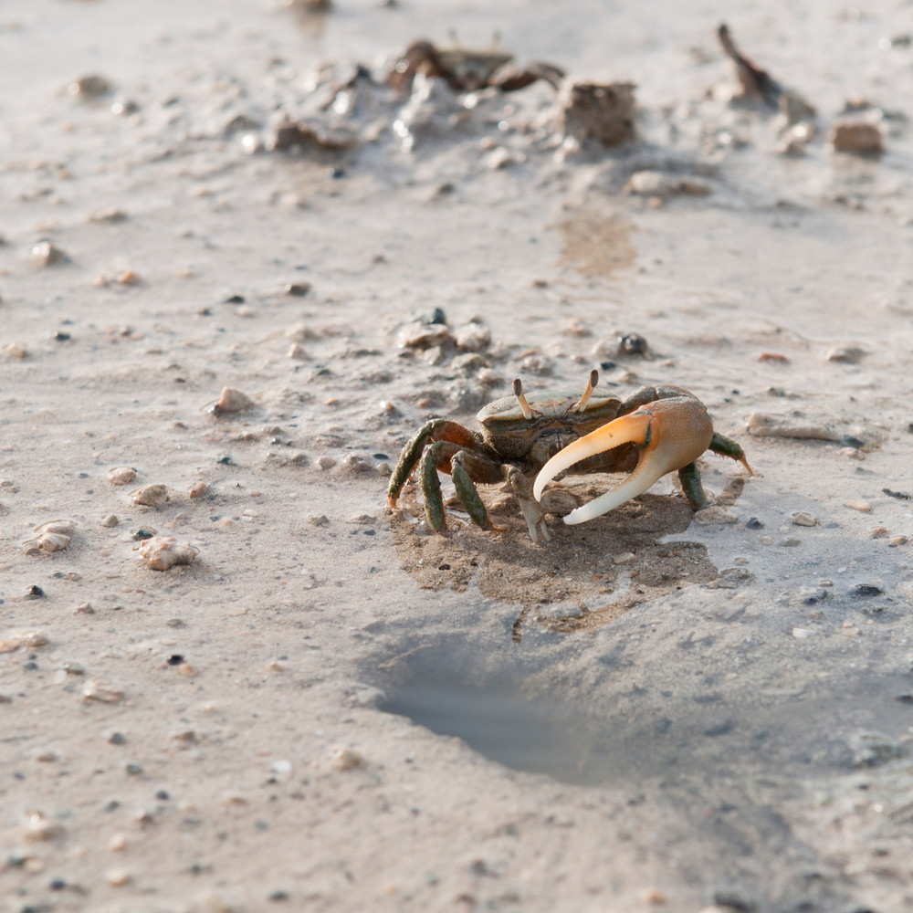 Crab Protecting Hole