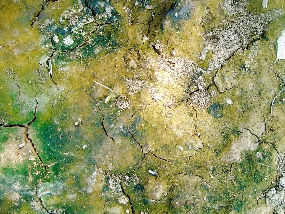 Cracked_grunge_lichen_ground