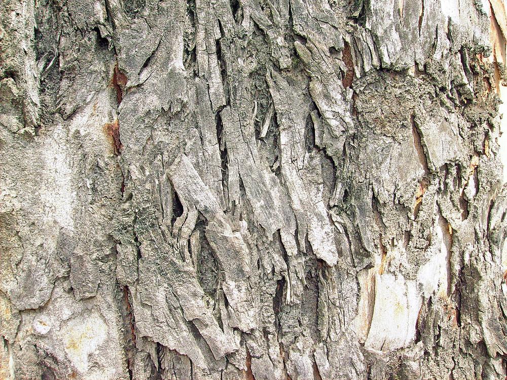 Cracked_tree_texture