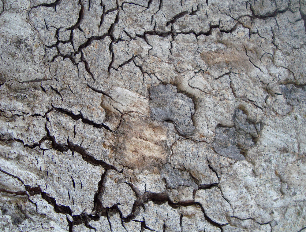 Cracked_wood