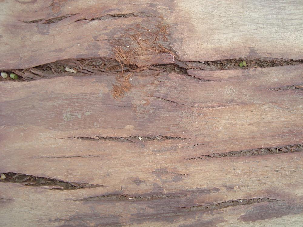 Cracked_wood