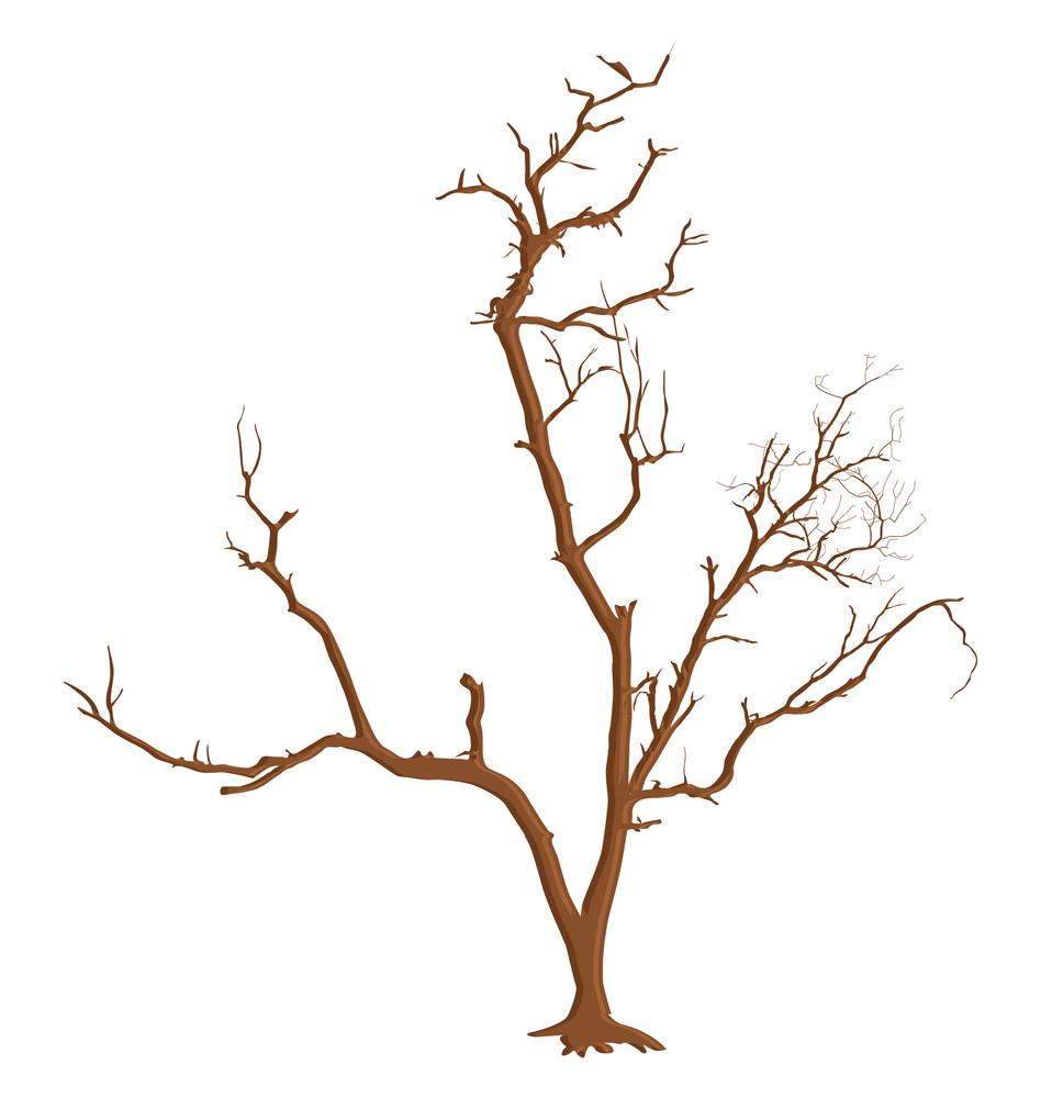 Creative Dead Tree Branches