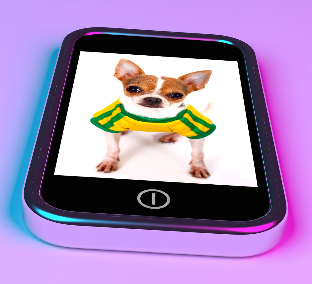 Cute Chihuahua Dog On Mobile Phone