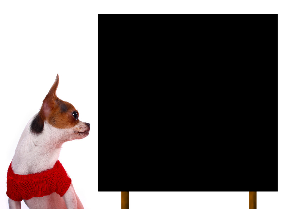 Cute Chihuahua Puppy Looking At A Blank Board