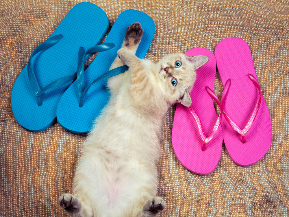 Cute little kitten wearing flip flops sandals lying on the back