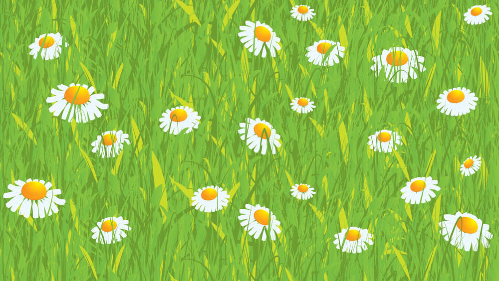 Daisy. Seamless Vector Background