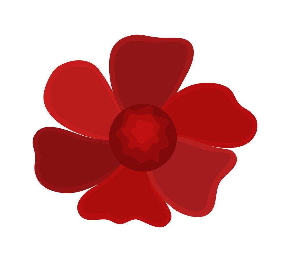 Dark Red Flower