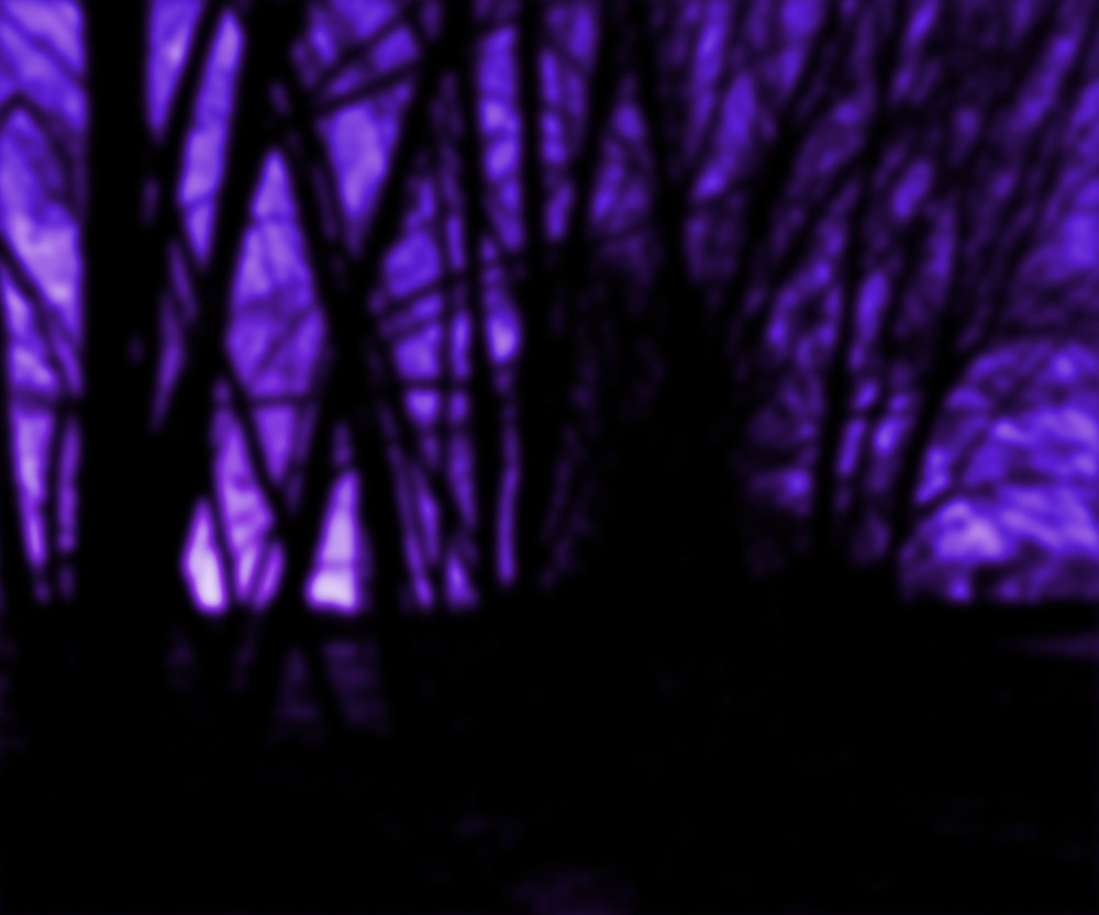 Dark Trees Background
