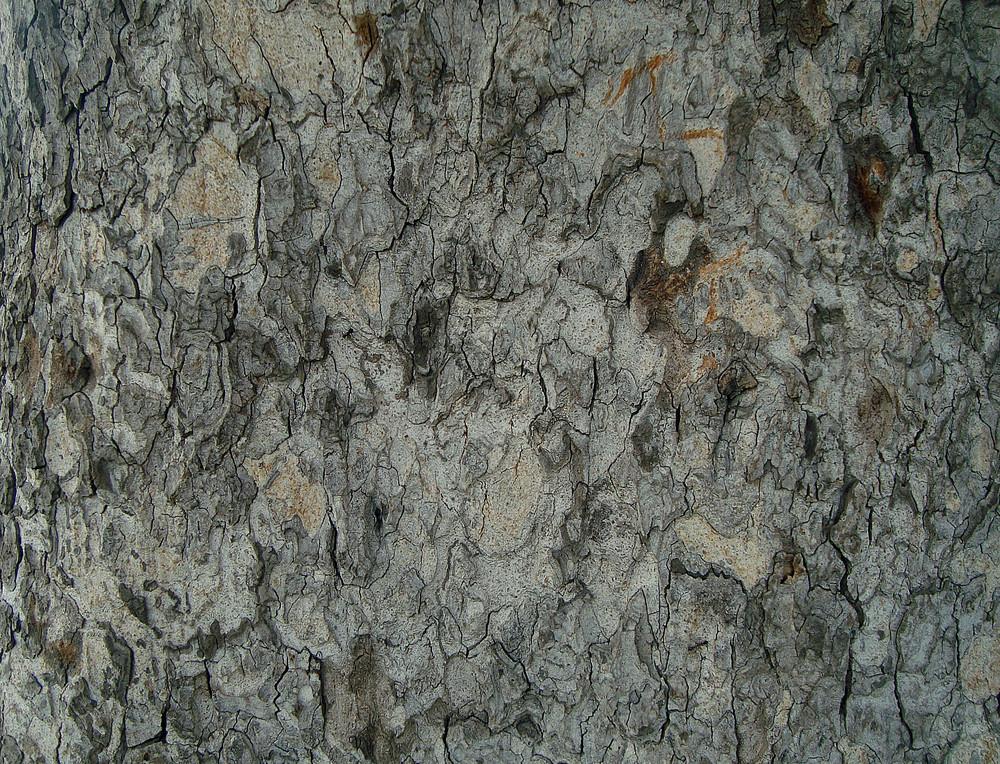 Dark_tree_bark