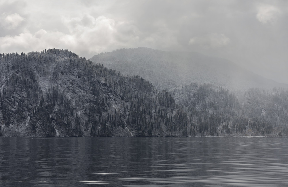 Snowy forest on the edge of a foggy lake