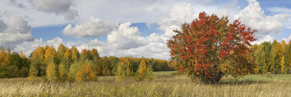 tall grass field forest golden trees and tall grass in autumn royaltyfree stock image