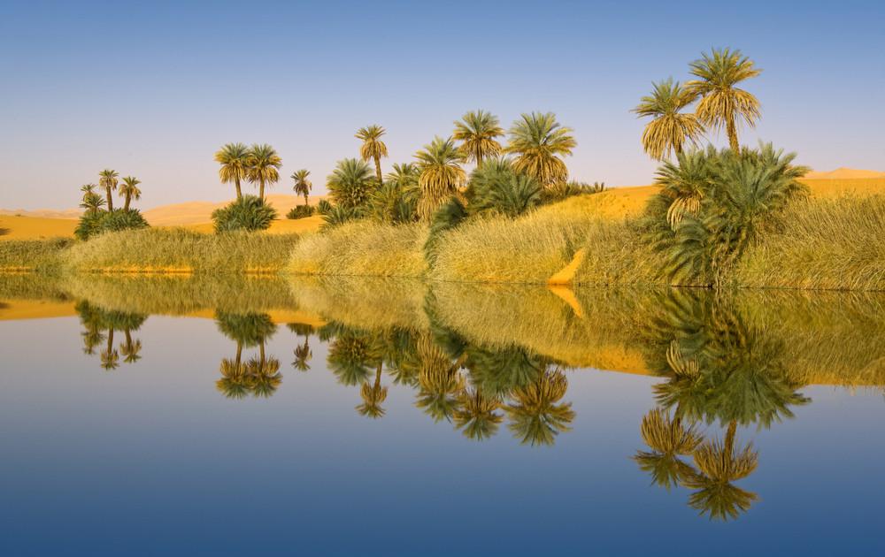 Sunlit oasis and lush vegetation in a sandy desert