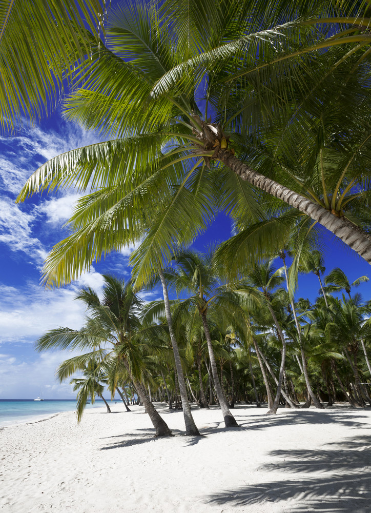 Palm trees on a white sand beach