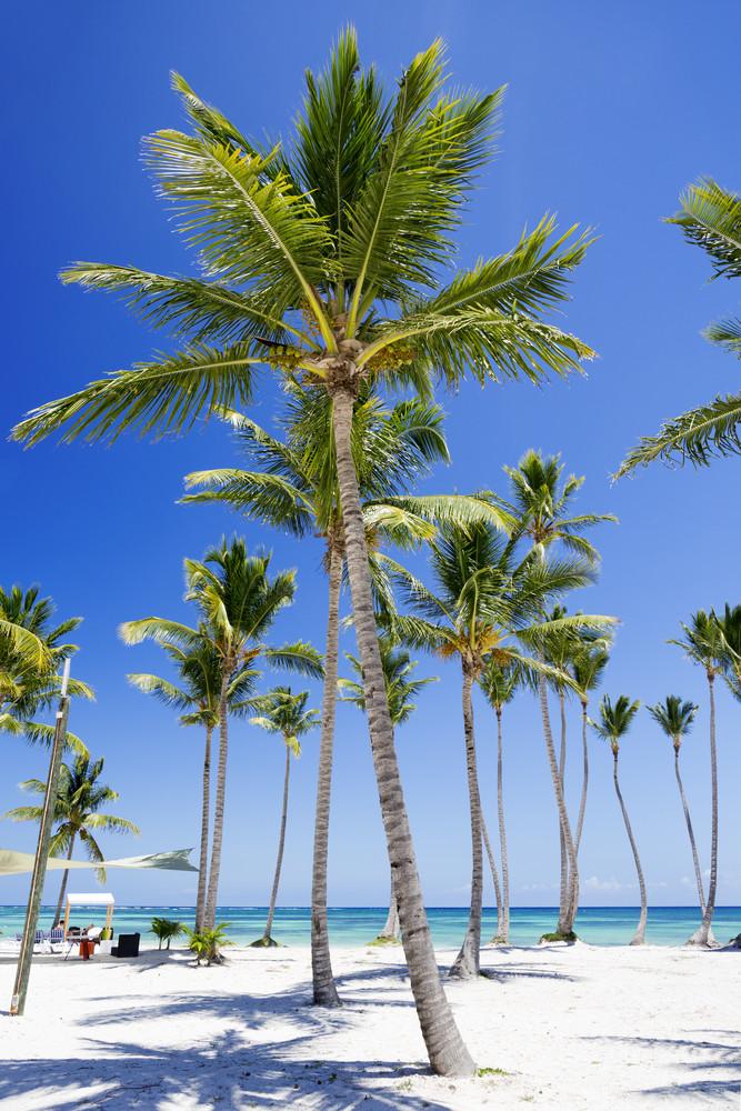 Palm trees on a white sand beach resort