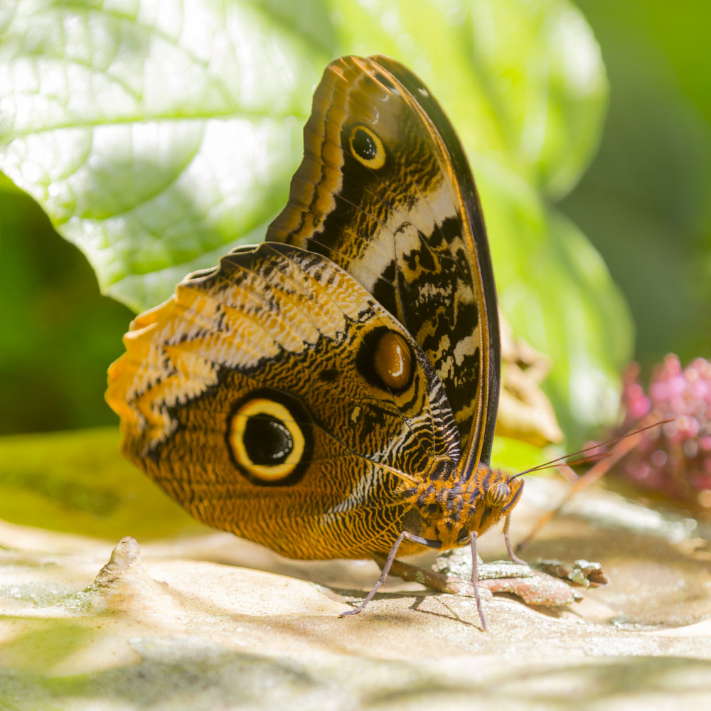 Colorful butterfly perched on the ground