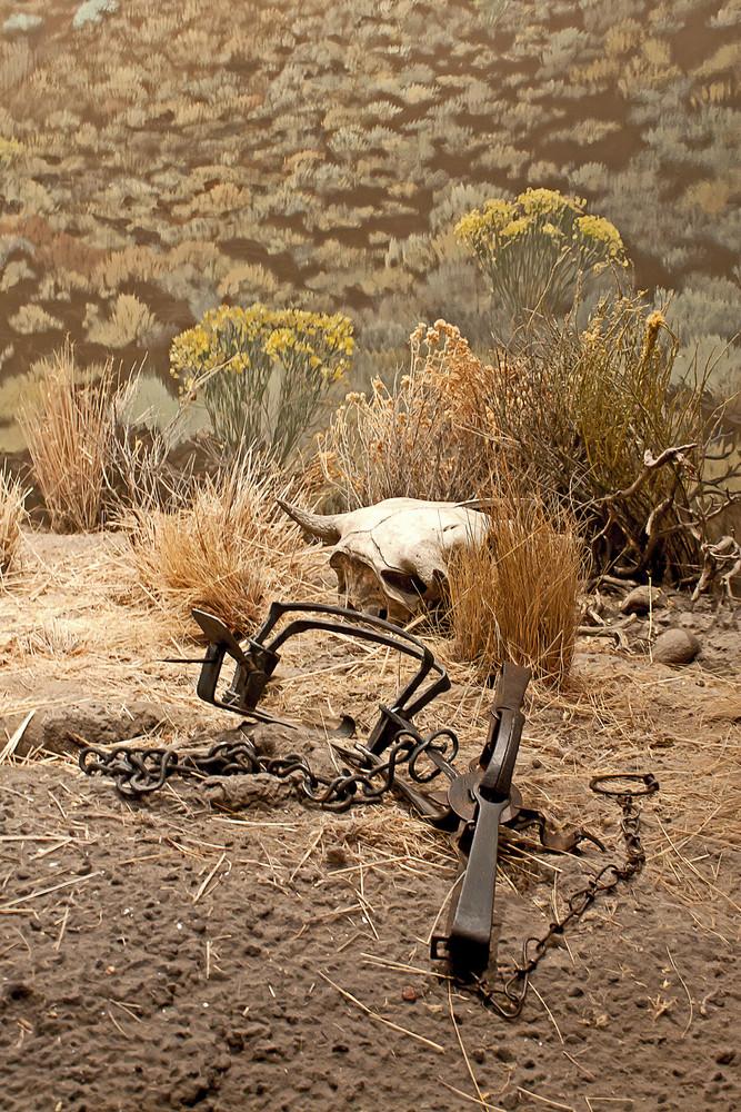 Dead Animal Skull In Field