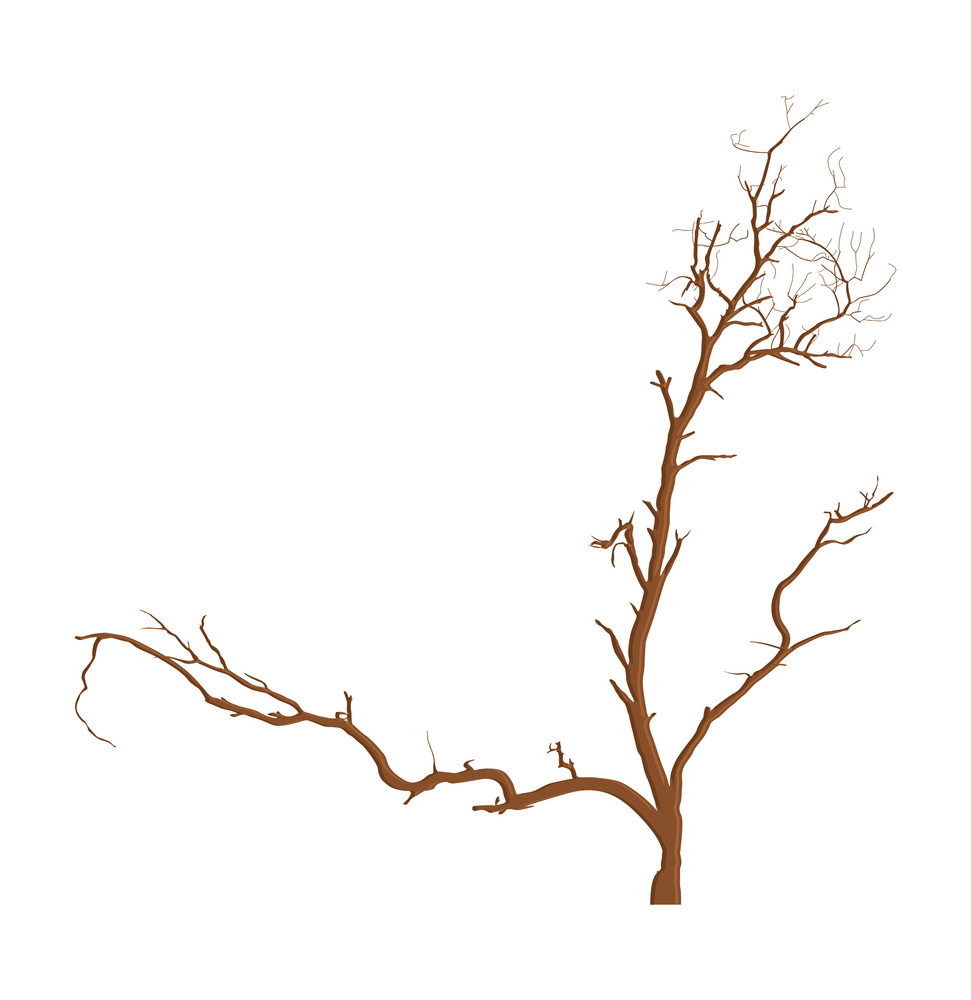 Dead Tree Abstract Design