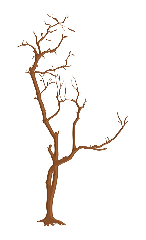 Dead Tree Branches Design Shapes