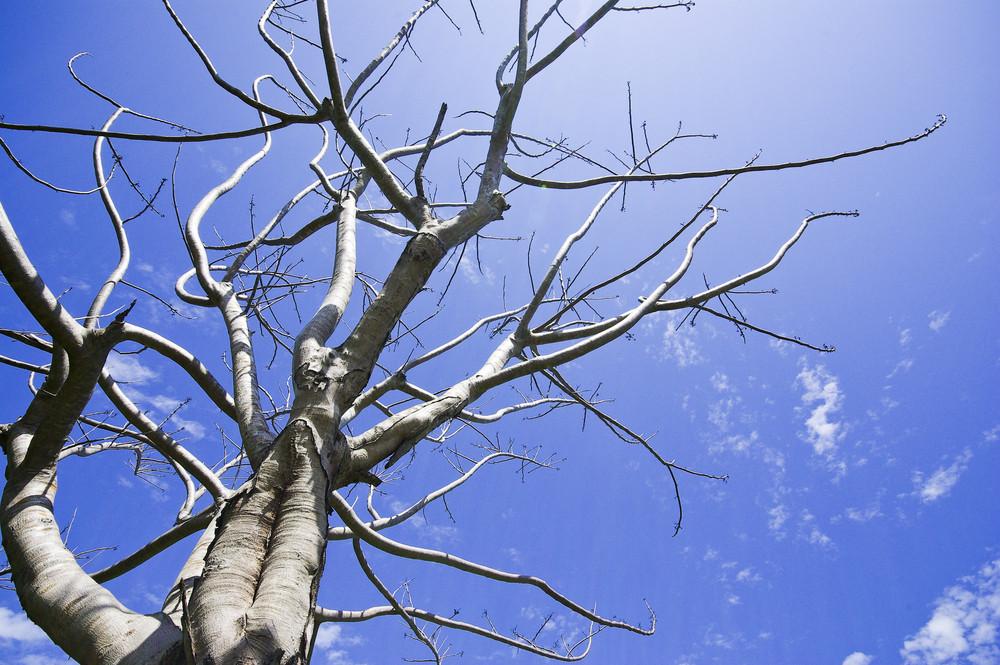 Dead tree on blue sky