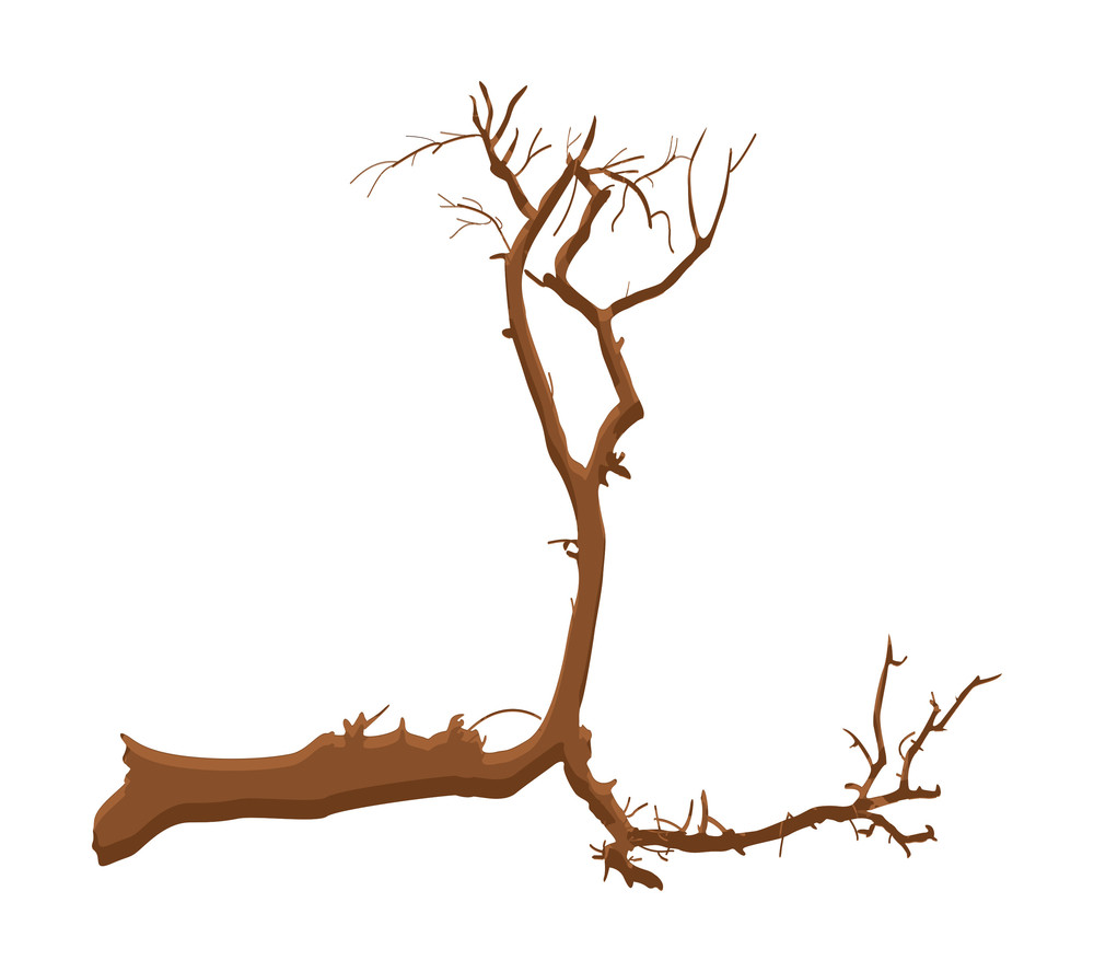 Dead Tree Shape Design