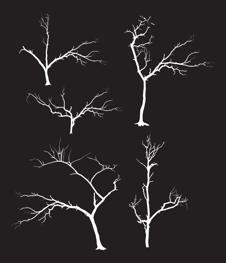 Dead Tree Shapes