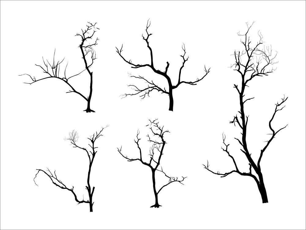 Dead Tree Silhouettes