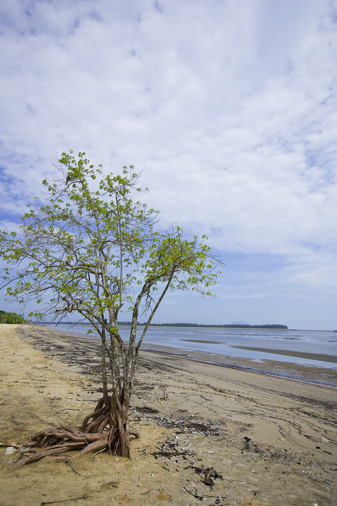 Dead Tree Still Standing on the Beach