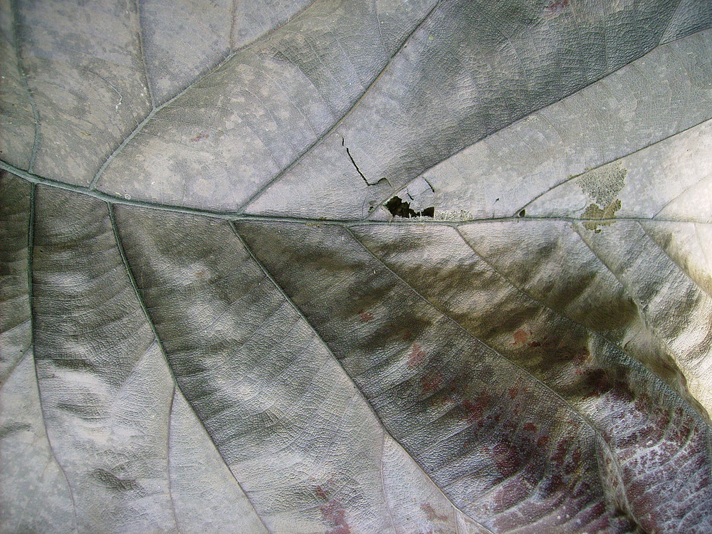 Dead_leaf_close_up_texture