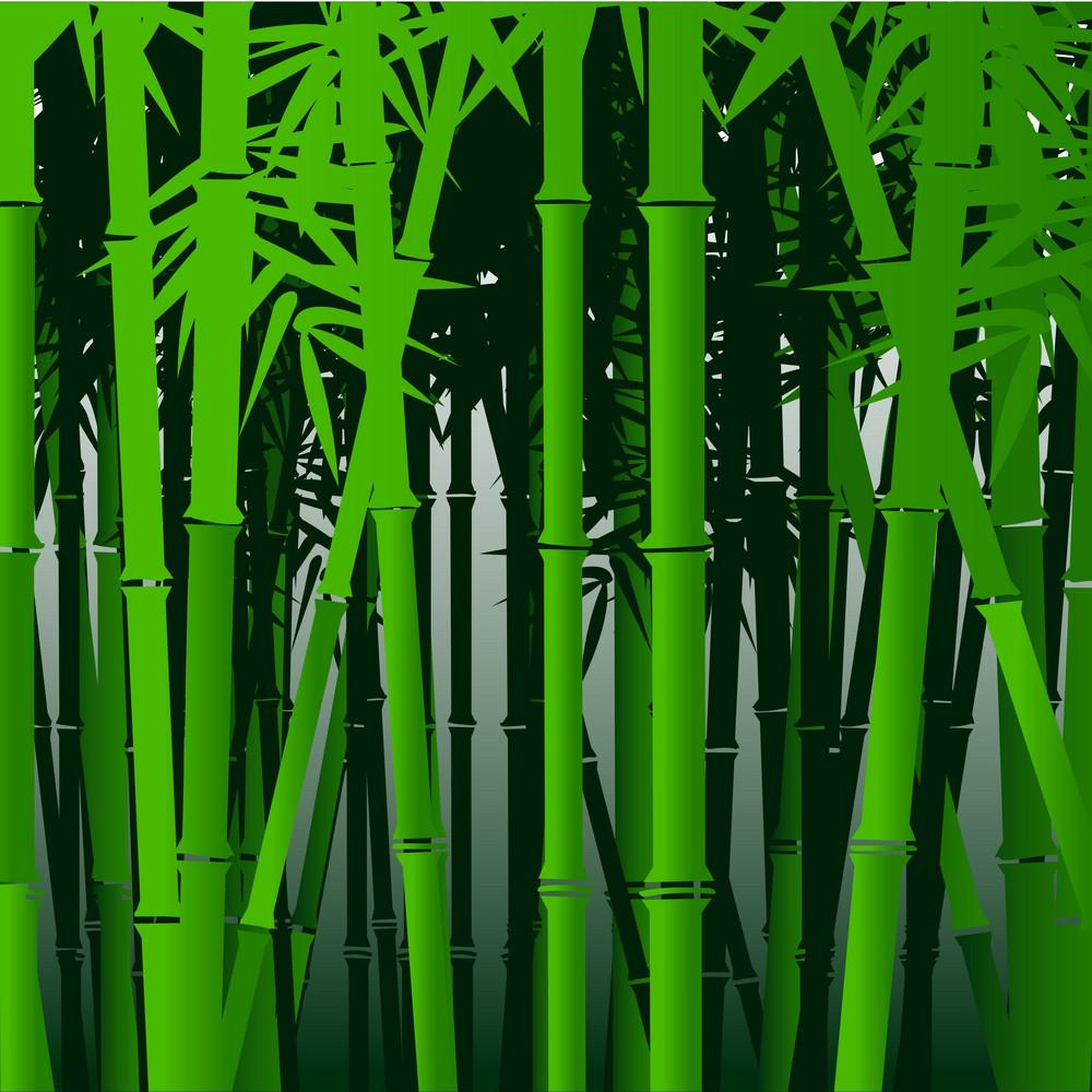 Decorative Bamboo