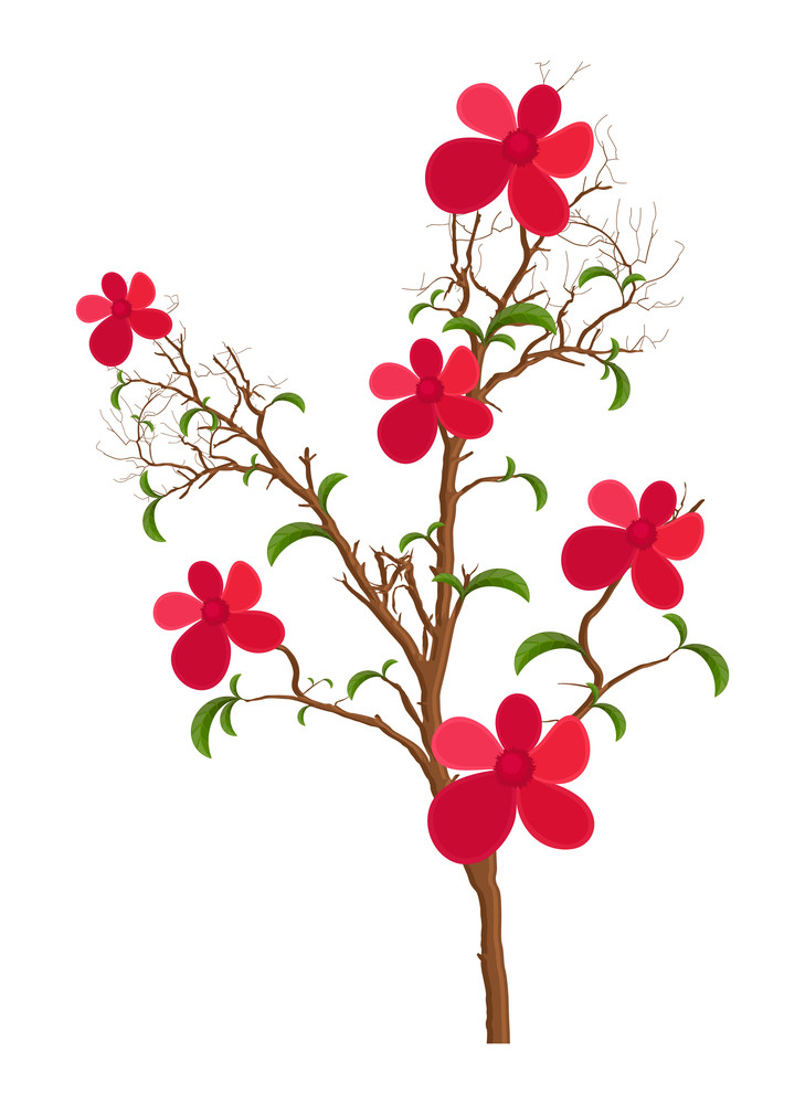 Decorative Flowers Plant