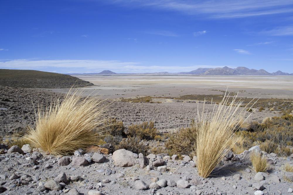 Desert vegetation growing under a blue sky