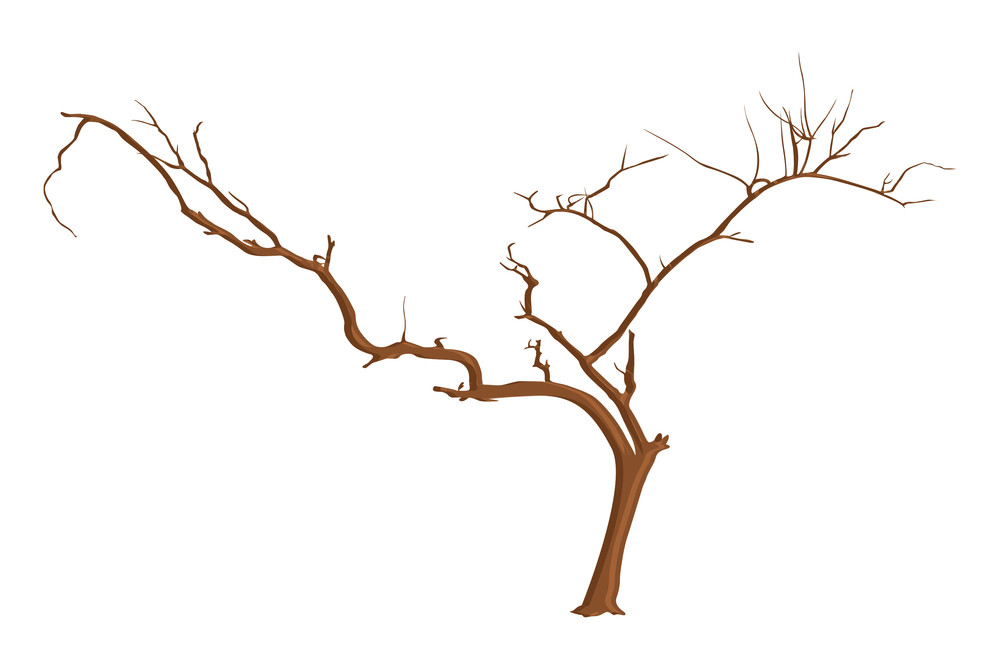 Design Art Of Dead Tree Branches