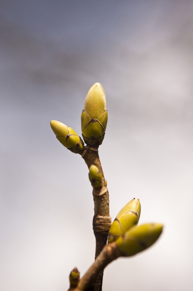 Detail Of A Tree In Spring