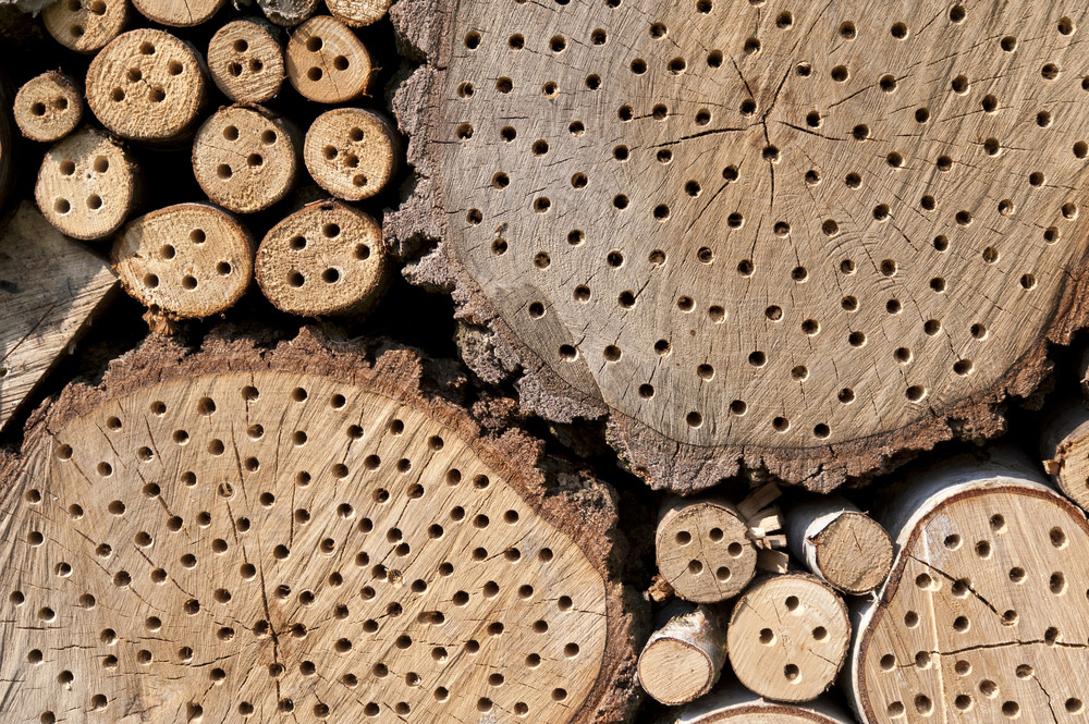Detail Of An Insect Hotel