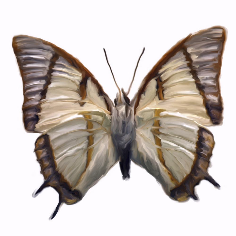 Digital Painting Of A Butterfly