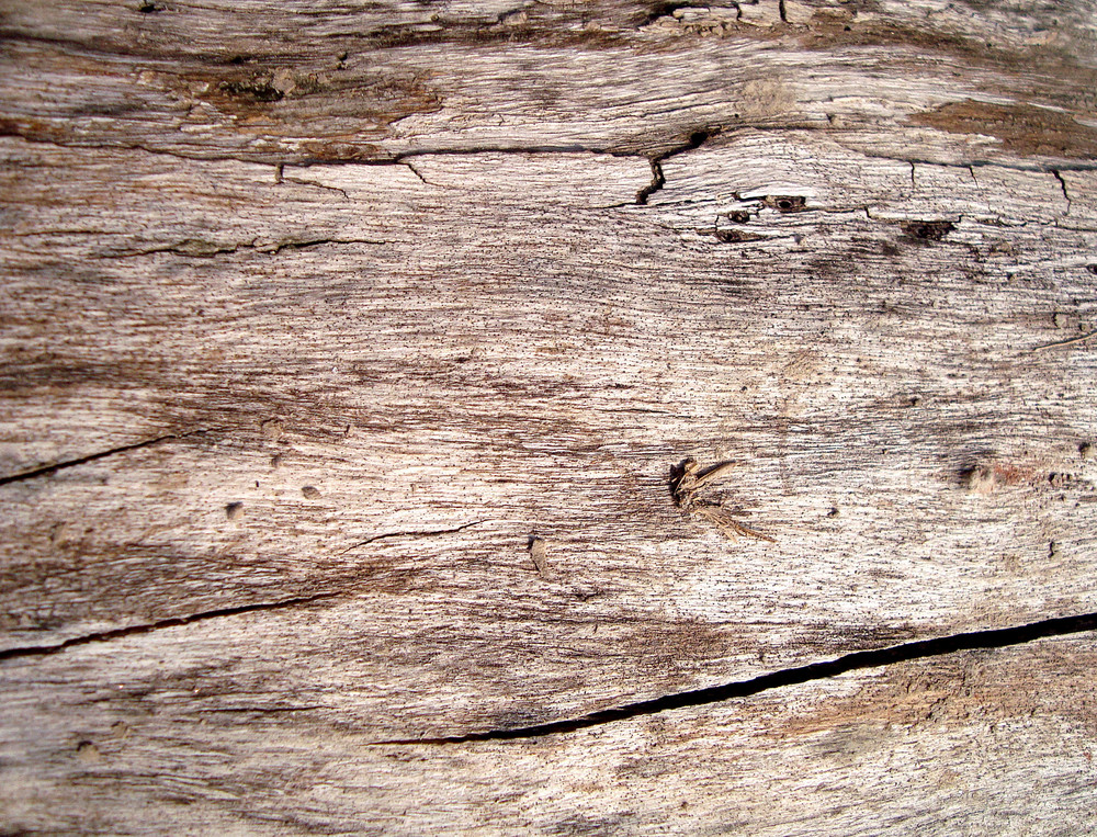 Distressed_old_wooden_texture