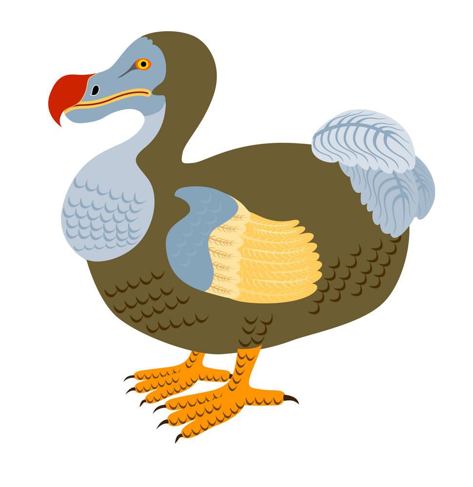 Dodo Bird Raphus Cucullatus Retro