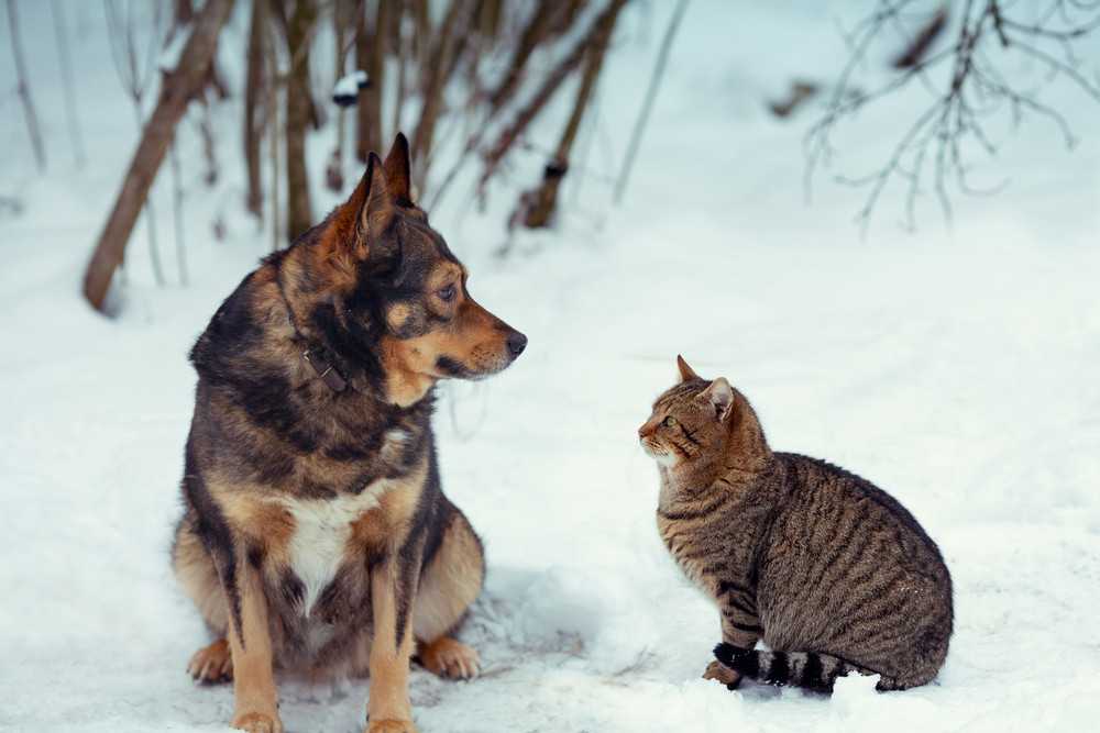 Dog and cat looking at each other and sitting together in the snow