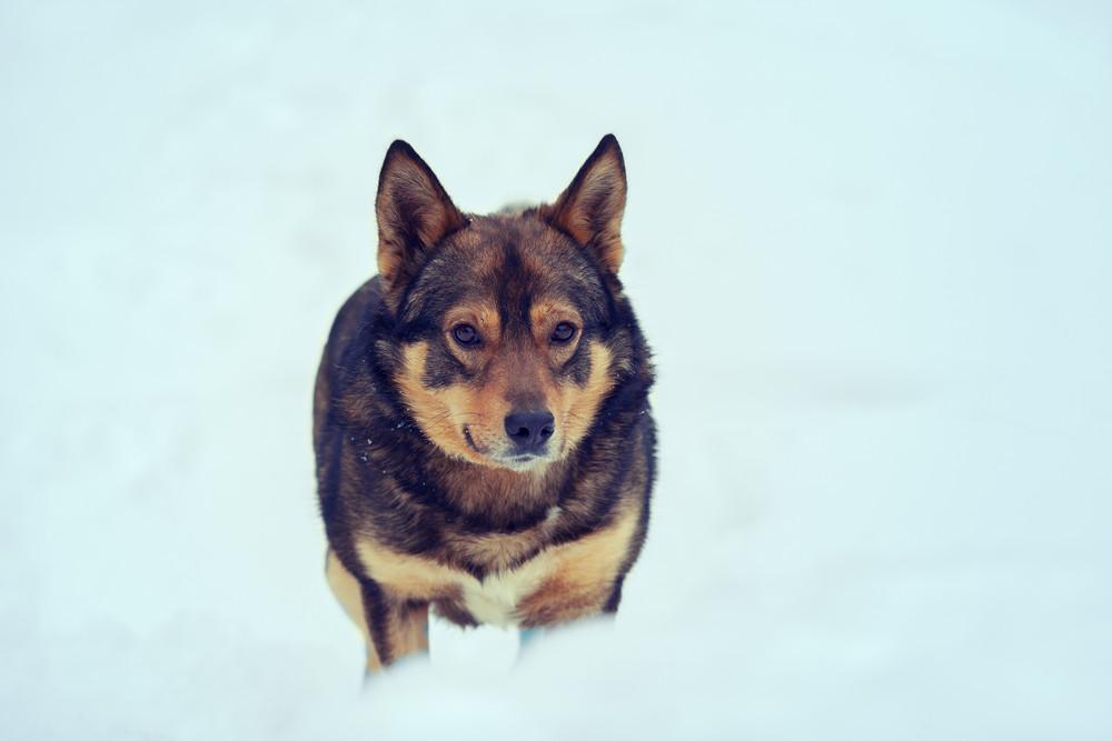 Dog walking outdoors in deep snow